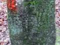 Friedelhausen_06 02 16_0153_bearbeitet-1