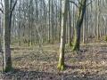 Friedelhausen_06 02 16_0164_bearbeitet-1