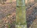 Friedelhausen_06 02 16_0181_bearbeitet-1