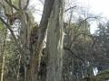 Grünberg-Vortour_04-03-17_2181_bearbeitet-1
