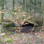 Im Hasselbacher Wald